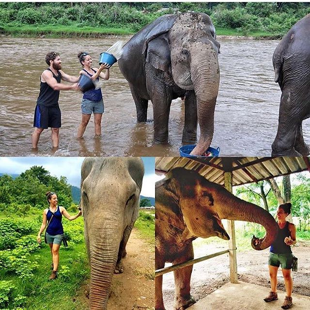 In honor of #WorldElephantDay, I'm resharing an amazingly powerful day for me with these majestic beauties in Chiang Mai, Thailand. Whether it was bathing and feeding them in Thailand or watching them do their thing from afar in Kenya and Tanzania, I've always been captivated by their gentle giantness. 🐘 -- Have you ever wanted to ride an elephant? 🐘  Are you aware of the abuse that elephants endure for humans' entertainment purposes, like rides or shows? It's literally called Breaking the Spirit, where they use hooks and chains to scare and hurt the elephants into obedience.  I learned today that 90% of elephant camps in Thailand still offer elephant rides, which is absolutely insane, as today I had WAY more fun at Elephant Nature Park, an ethical camp that prohibits riding, than I would have had sitting on top of the elephant.  We fed four elephants watermelons 🍉, pineapples 🍍 and bananas 🍌. We walked with them through beautiful fields and forests.  We bathed them and cooled them down in the river.  Ah. Mazing. Day.  Moral of the story: When you're traveling, think about the effect your choices have and ask yourself whether you would truly feel good about that effect. If you wouldn't, what else can you do that would bring you the same amount of joy (or in my case today, even more!)?