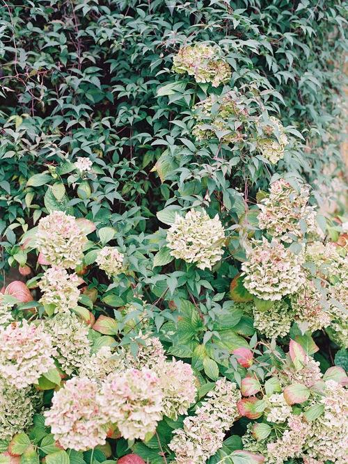 Cutting Garden -