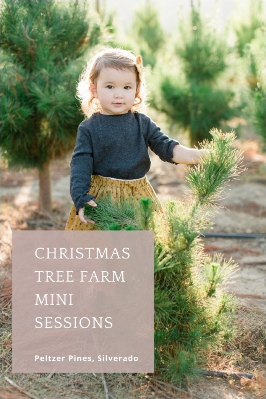 Christmas Tree Farm Mini Sessions October 25th Taylor Kinzie Photography