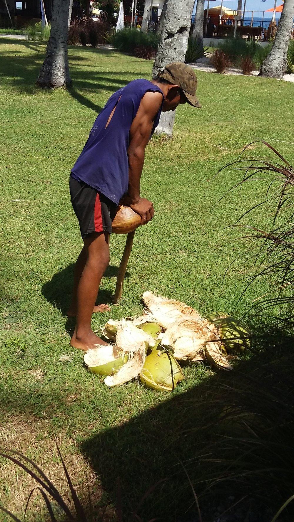 für unser Kokosöl von unseren Palmen.jpg