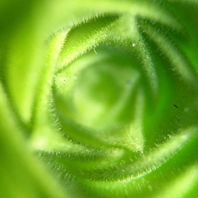 Rule 5 of #TheSisterhoodOfTheTravelingLens - When it's green, you know it's your scene. Get. That. Green. Tho.
