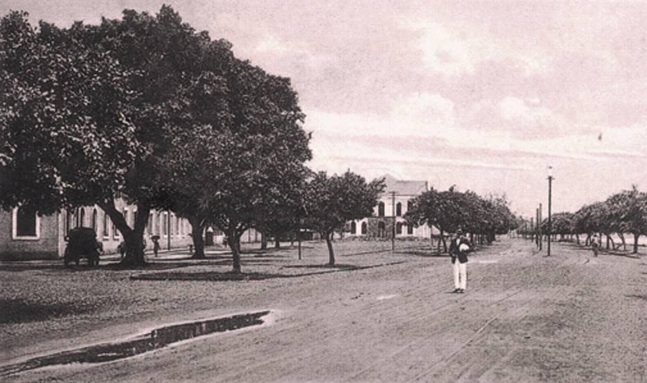 Campo de Dom Manoel (Campal) planted c. 1829