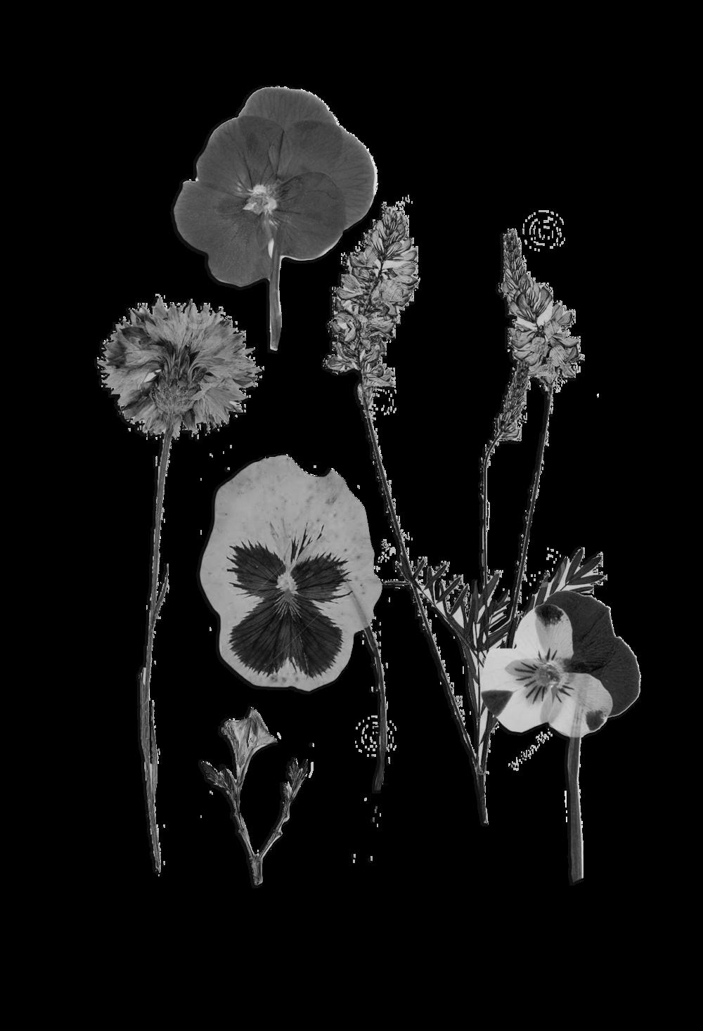 floral arrangements.png