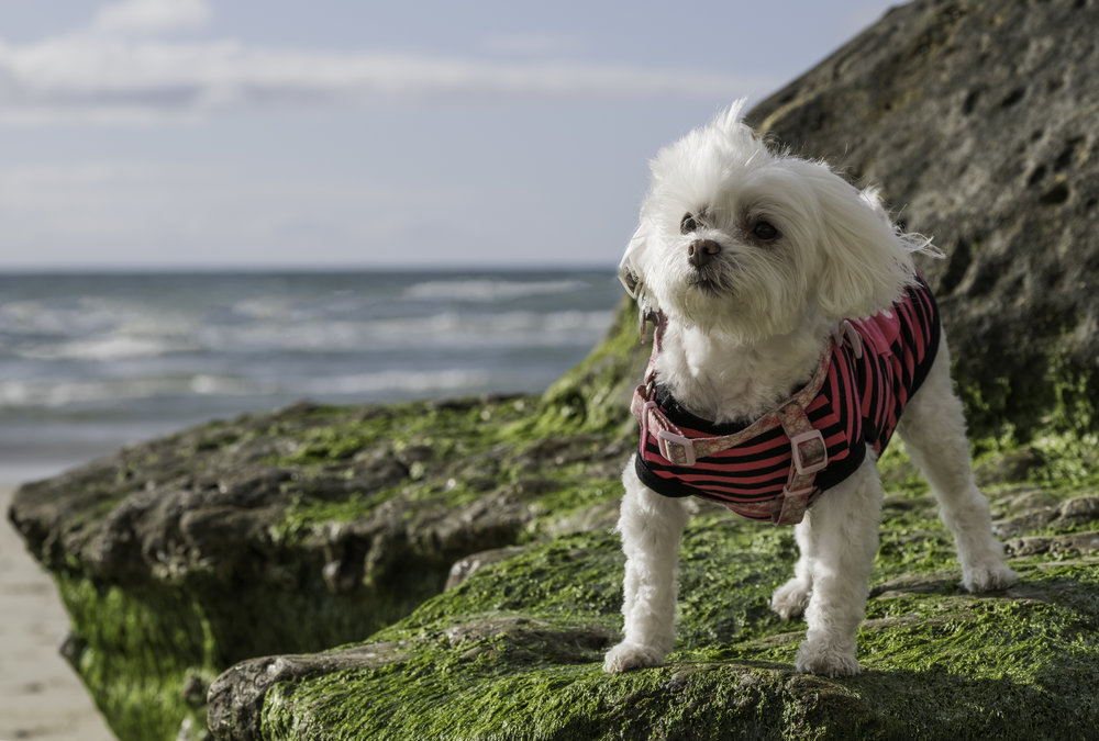 Mighty Hearts Project gives hope to owners of dogs with mitral valve disease