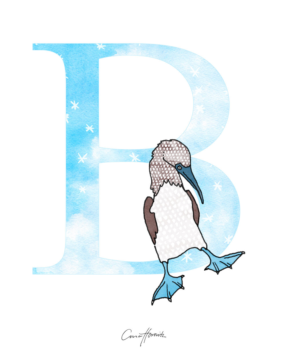 B Blue Footed Booby