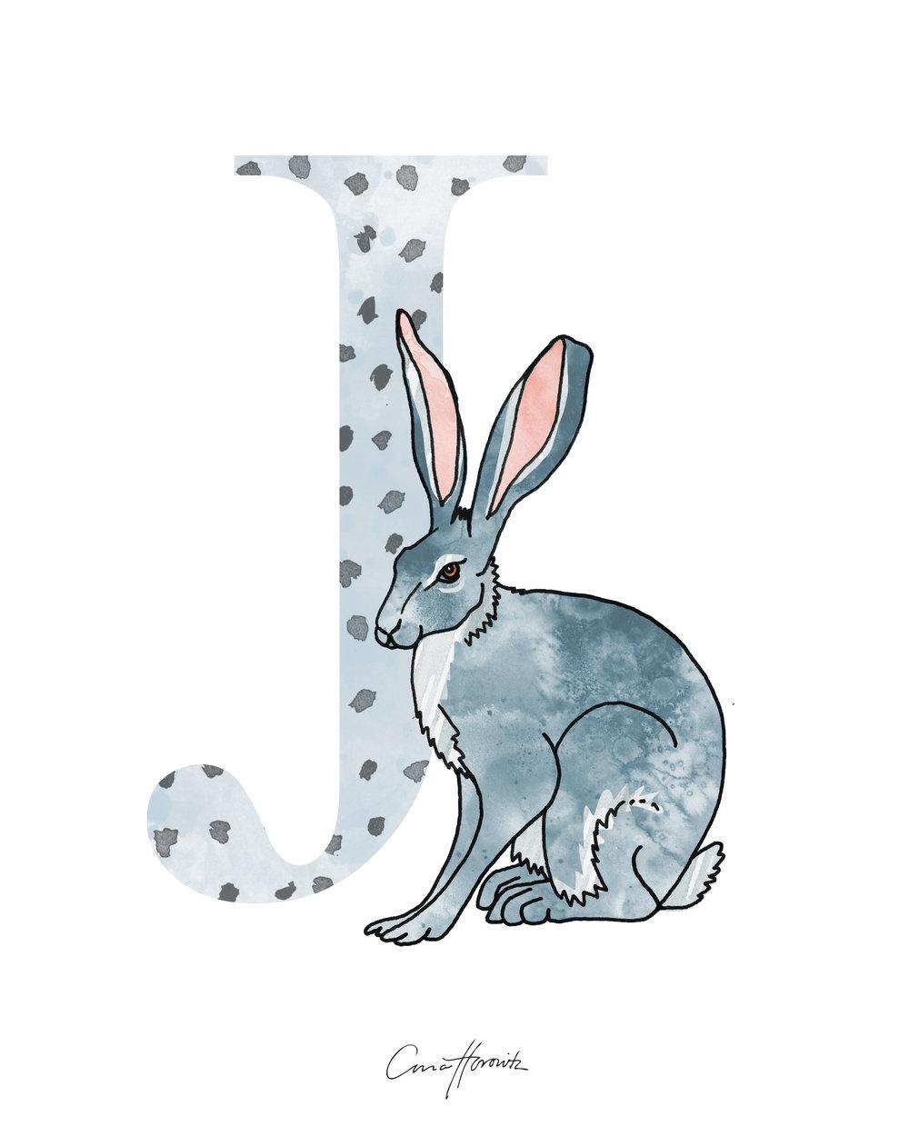 J Jackrabbit