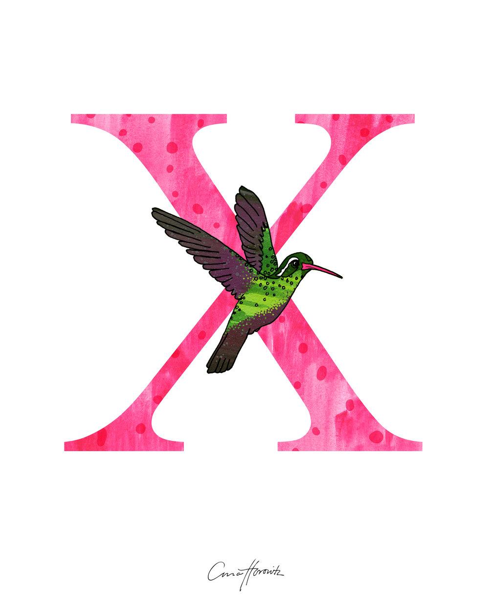 X Xantus's Hummingbird