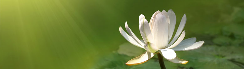 Lotus Banner 1.jpg