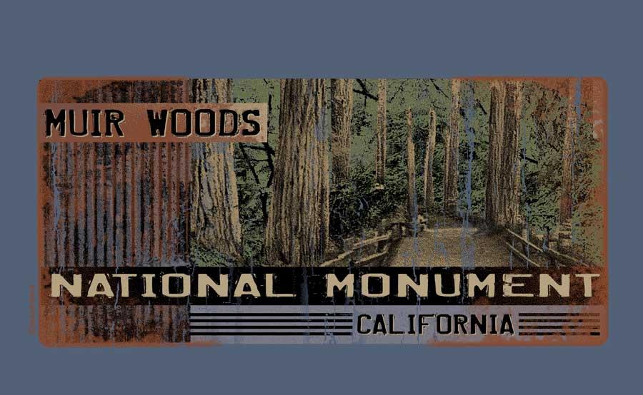 Corrugated Muir Woods.jpg