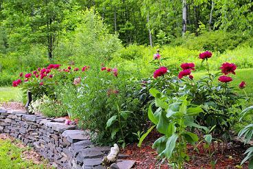 Wall Garden 1.jpg