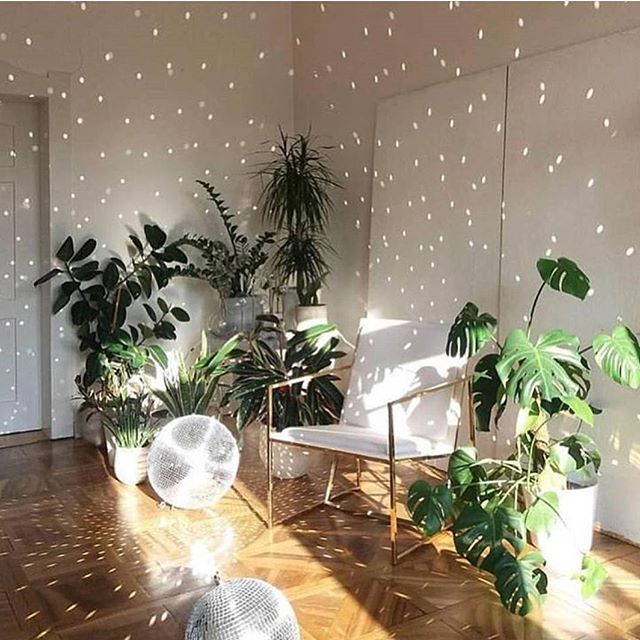 #mood: disco lights and plants, always. @botanicalsbybella