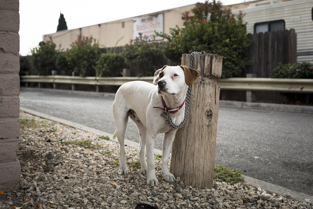 Cooper. San Jose. 2015