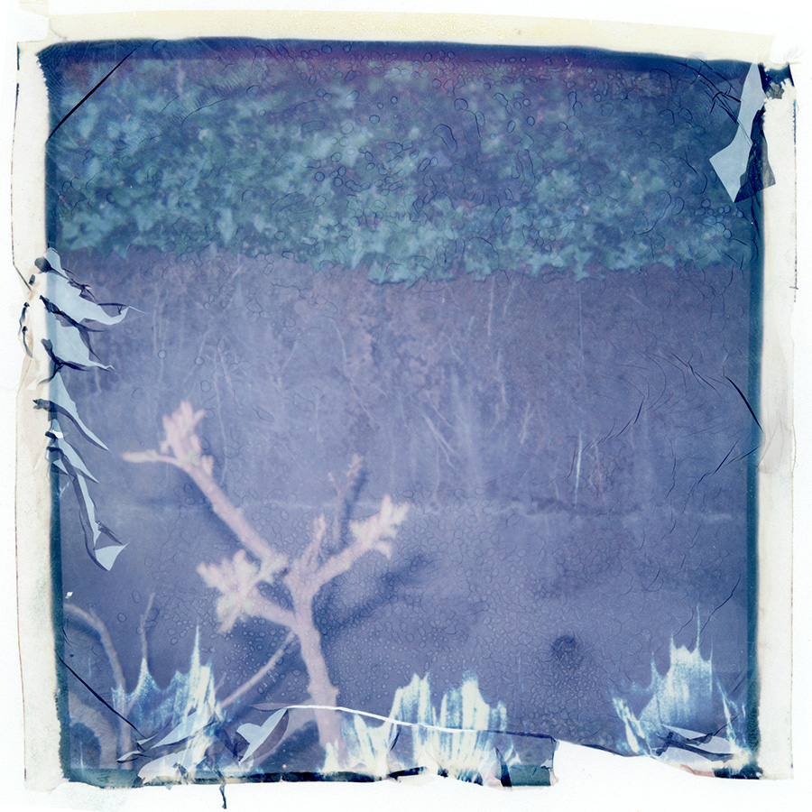 polaroid_transfer_027.jpg