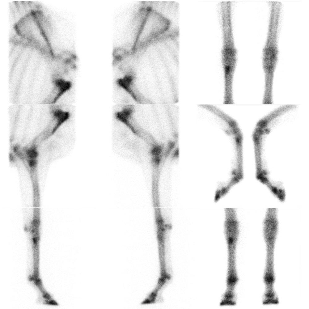 20170203-NM Front Limbs V.jpg