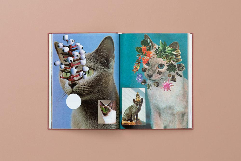 CATS_PLANTS_07-copy.jpg