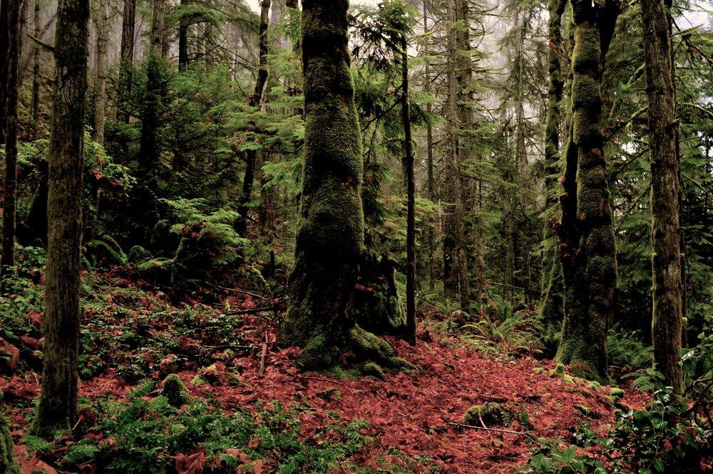 Gowlland Tod Provincial Park, BC