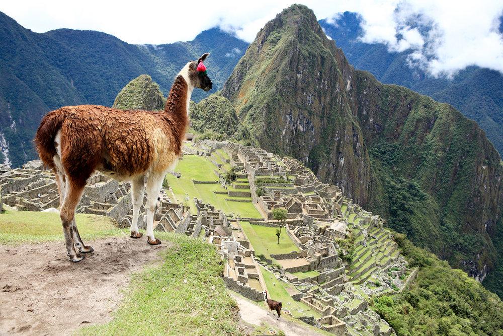 Peru | Brazil | Argentina | Sth Africa