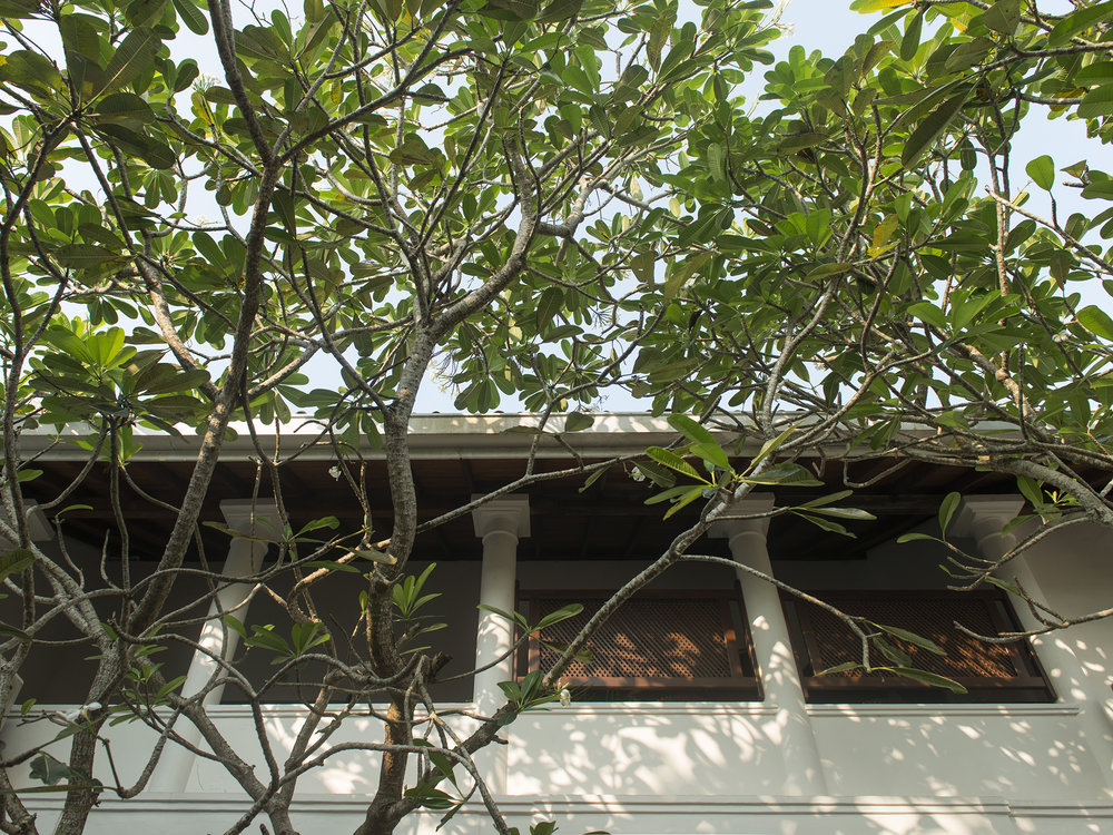 19-Ambassadors House-Galle - Courtyard tree canopy.jpg