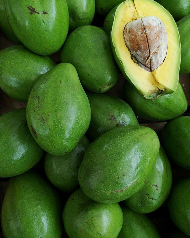 Avocado: Fruits of Jamaica