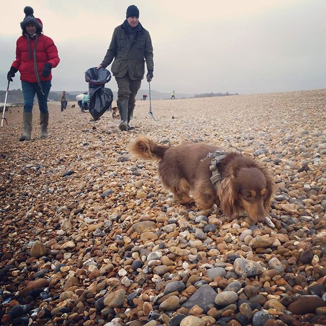 Everyone can #getinvolved in a #beachclean with #theplastictide :) #dogs #conservation #plasticpollution