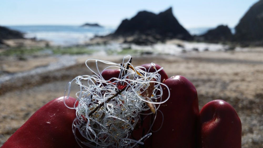 Tangled fishing line, a depressingly common item.