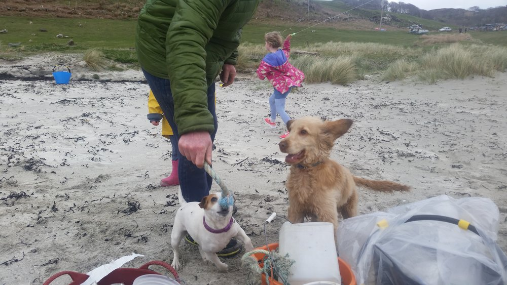 Dogs pick-up beach litter and bring it to owner as a toy.  We heard of dogs that have died eating marine and plastic litter on beaches at Gwithian.