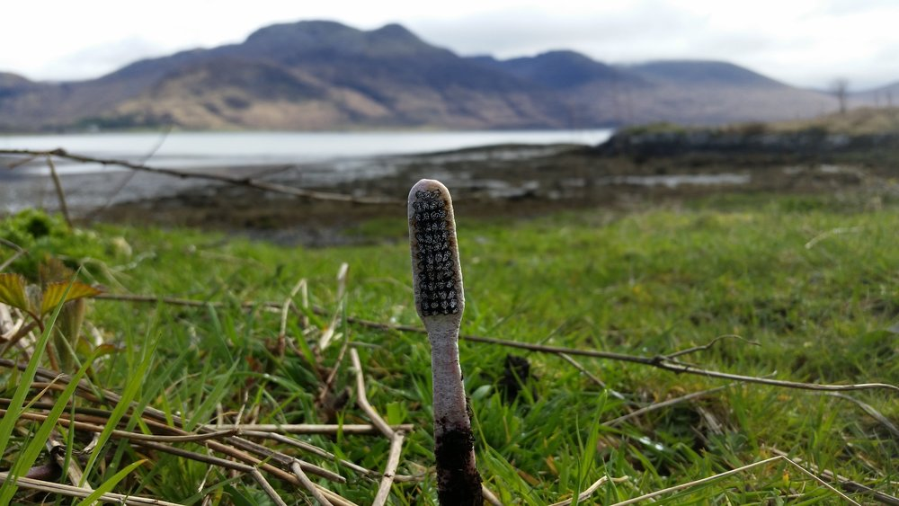 Toothbrush on Killiechronan beach,The Isle of Mull.