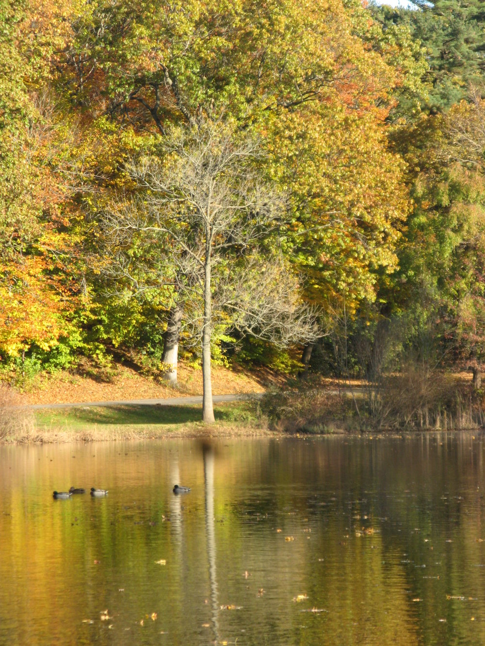 There are many parks sprinkled around New Haven that are beautiful in any season. Our favorite is Edgewood Park where you walk around the large pond and feed the ducks