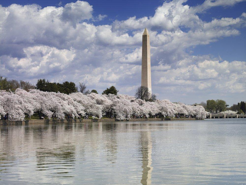 Locals+Compass+Washington+DC.jpg