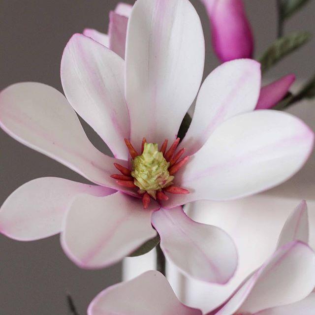 Sugar magnolia ❤️ #foodphotography #foodie #cake #cakedecorating #wedding #weddingcake #gumpasteflowers #sugarflowers #magnolia #sugarart #dessert #sweet #modernkake #instacake