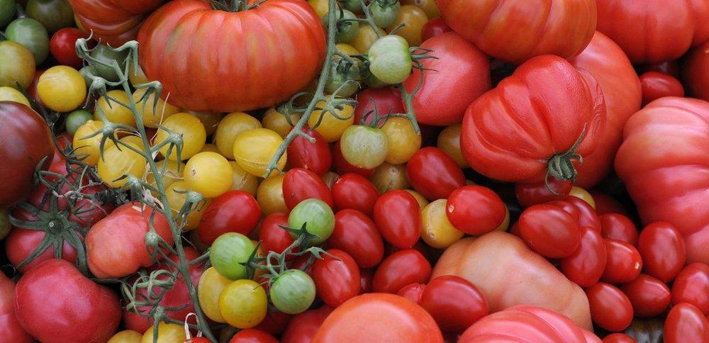 Tomatos pile.jpg
