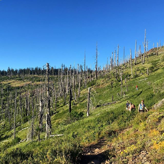 Old burn + new growth = stunning contrast of textures and time atop Grizzly Peak. #grouphike #exploregon #grizzlypeak #outnabout #rushmoresociety
