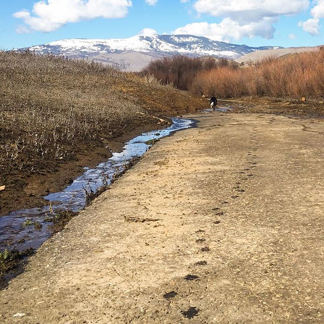 Flow as expressed in snow melt and puppy prints along a seasonal lake-bottom road revealed in late summer, submerged at spring thaw. • • • • • #emigrantlake #sundayfunday #oregon #southernoregon #exploreoregon #lakebottom #puppyprints #ashland #dogsthathike #bordercollie #getoutstayout #springthaw2018