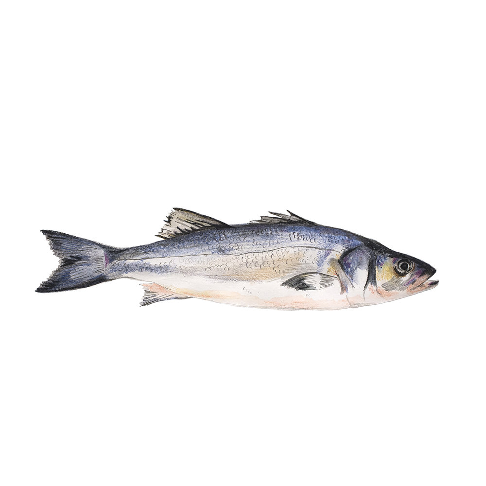 fish square.jpg