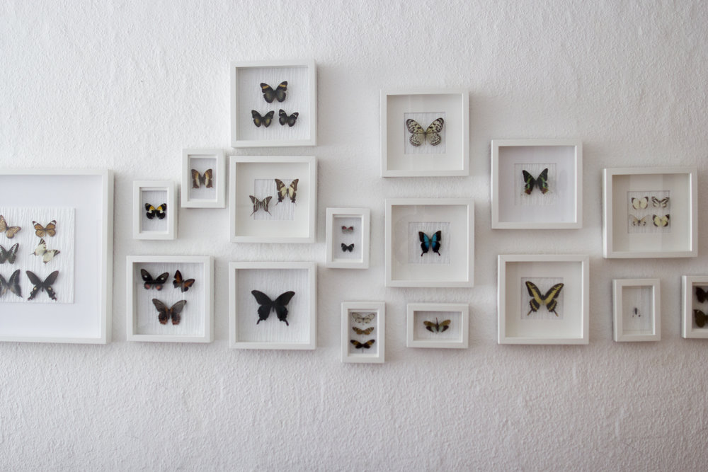 Butterfly wall at Leah Stuhltrager's home in Berlin.