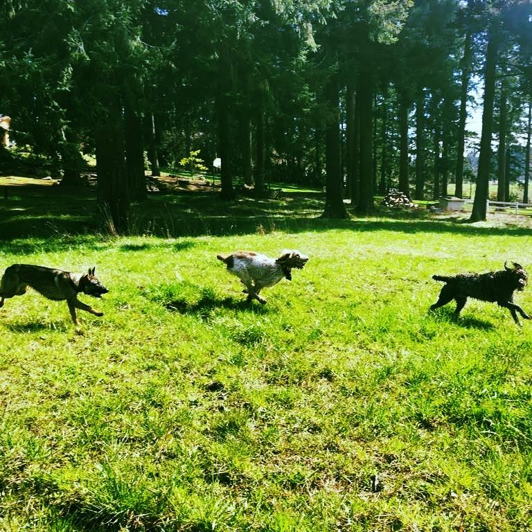 Dogs Chasing.jpg