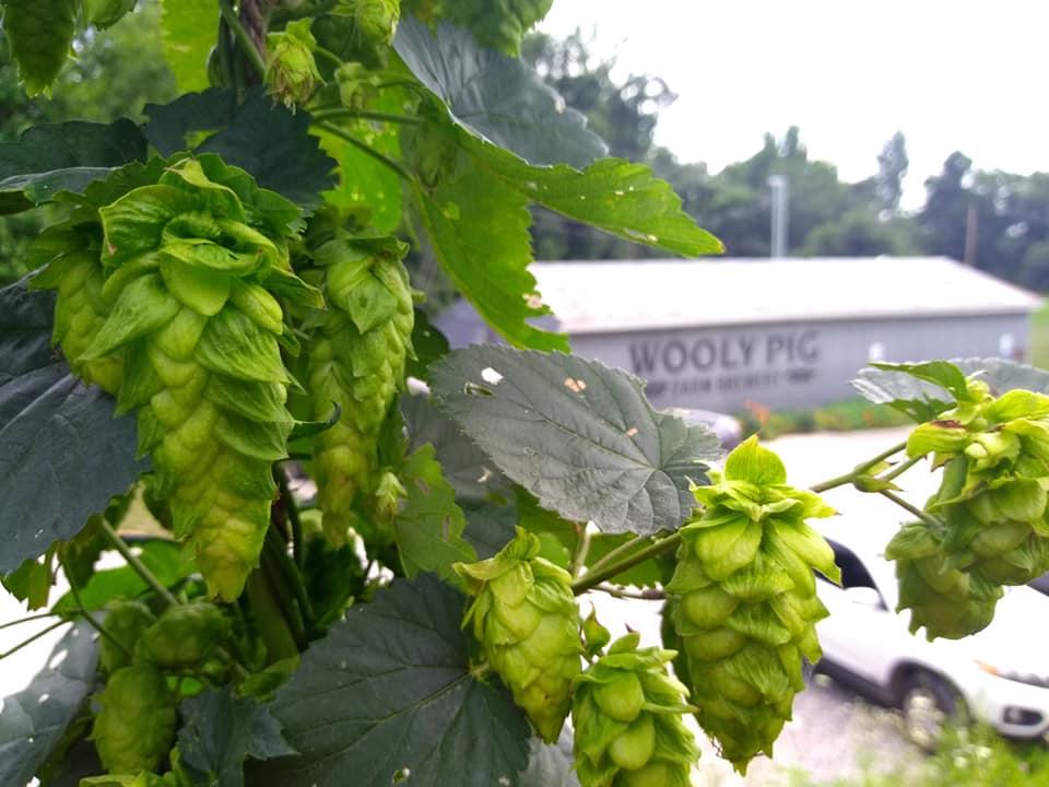 hops&brewery.jpg