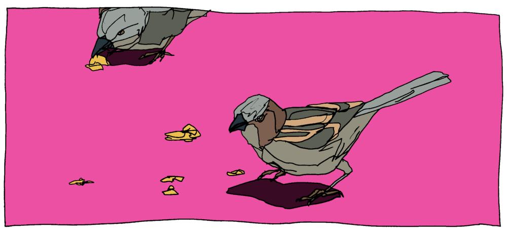 Danny's Birds