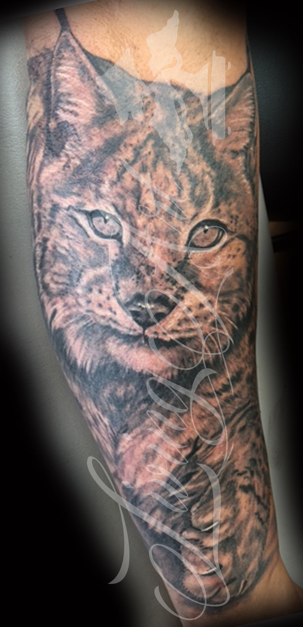 chris owen tattoo_bob cat tattoo_lynx tattoo_chris owen black and grey tattoo.jpg