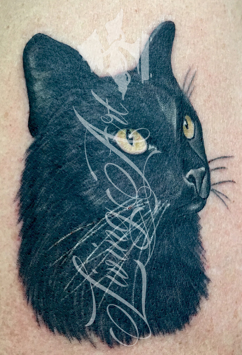 josh kirkpatrick tattoo_ cat tattoo_cat.jpg