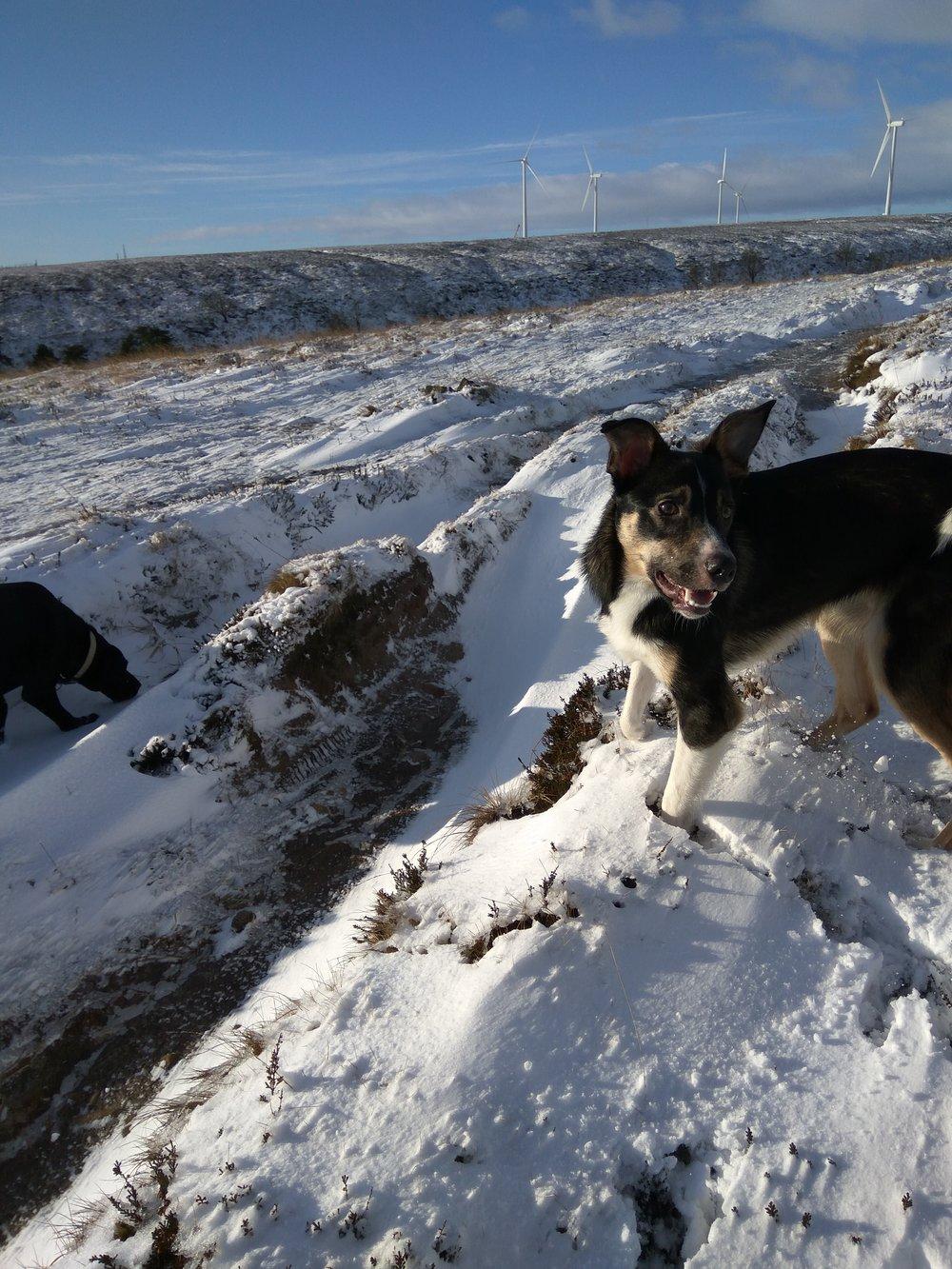 snowy dog walk at Ogden