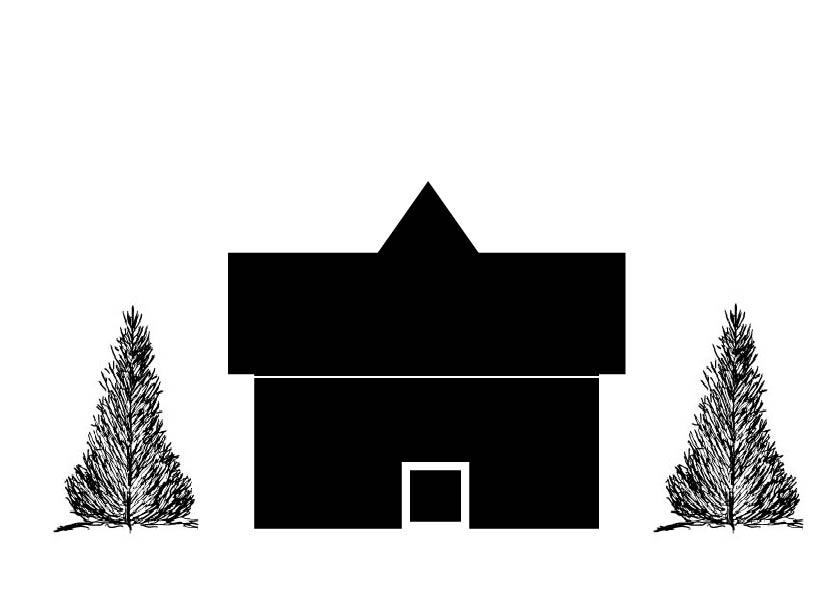 pyramidal evergreen 20 to 45 tall-03.jpg