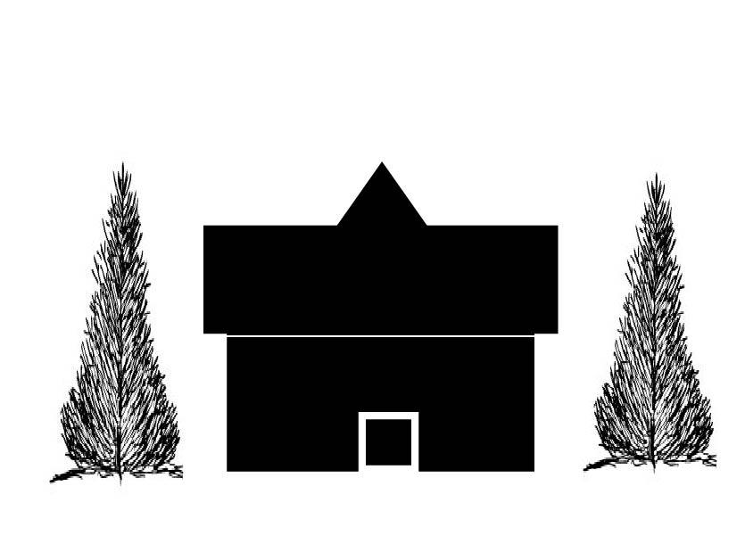pyramidal evergreen more than 50 tall-03.jpg