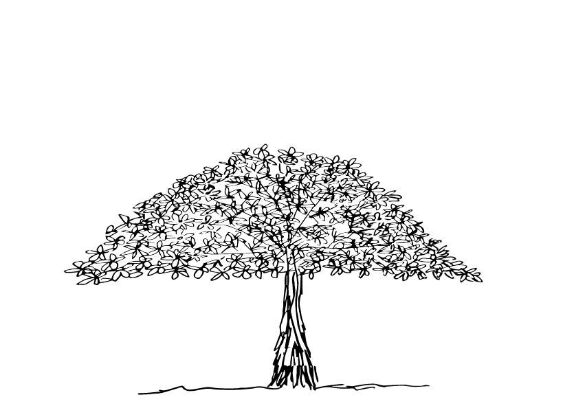 spreading ornamental tree 1-02.jpg