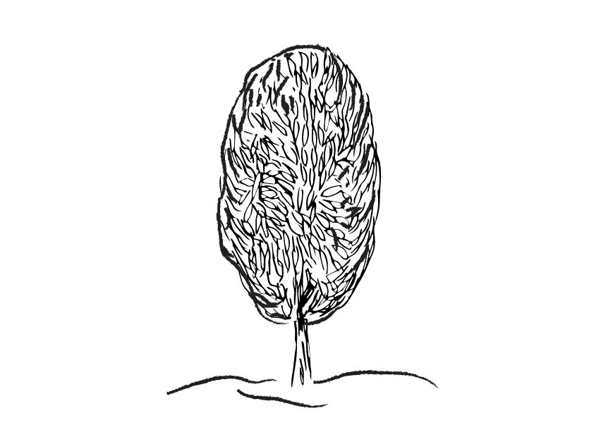 oval ornamental tree 1-02.jpg