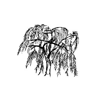 WEEPING TREES