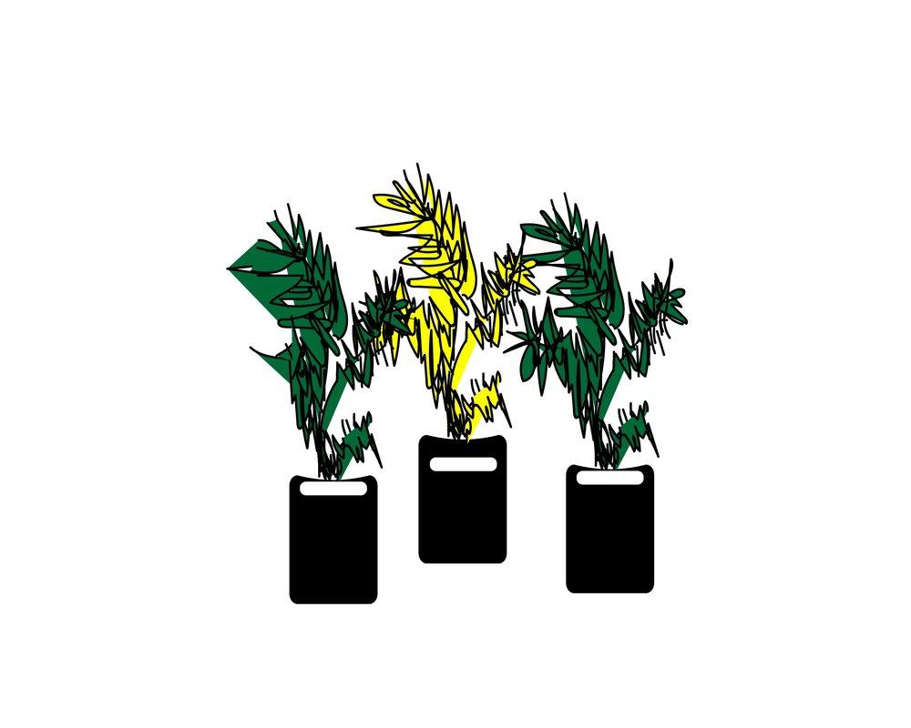UNIQUE & RARE EVERGREEN TREES