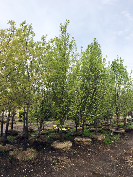 Tree Selection at Garden Shop_1.jpg