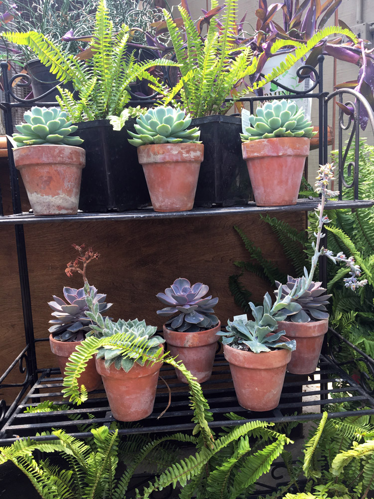 SucculentCollection.jpg
