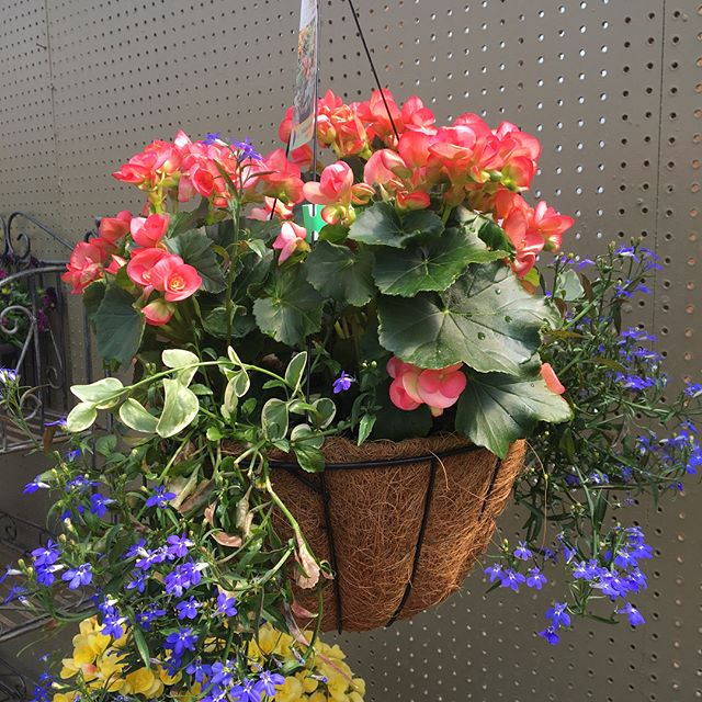 A Mother's heart is a garden always growing! Happy Mother's Day from @albynsnursery . . . . . Discover a gorgeous gift for your Mother! Our hanging baskets are just the beginning! . . . #motherdayweekend #gardencenter #lickingcounty #newarkohio #sunshine #hangingbaskets #shoplocal #momsday #mothersdaygift #flowershop